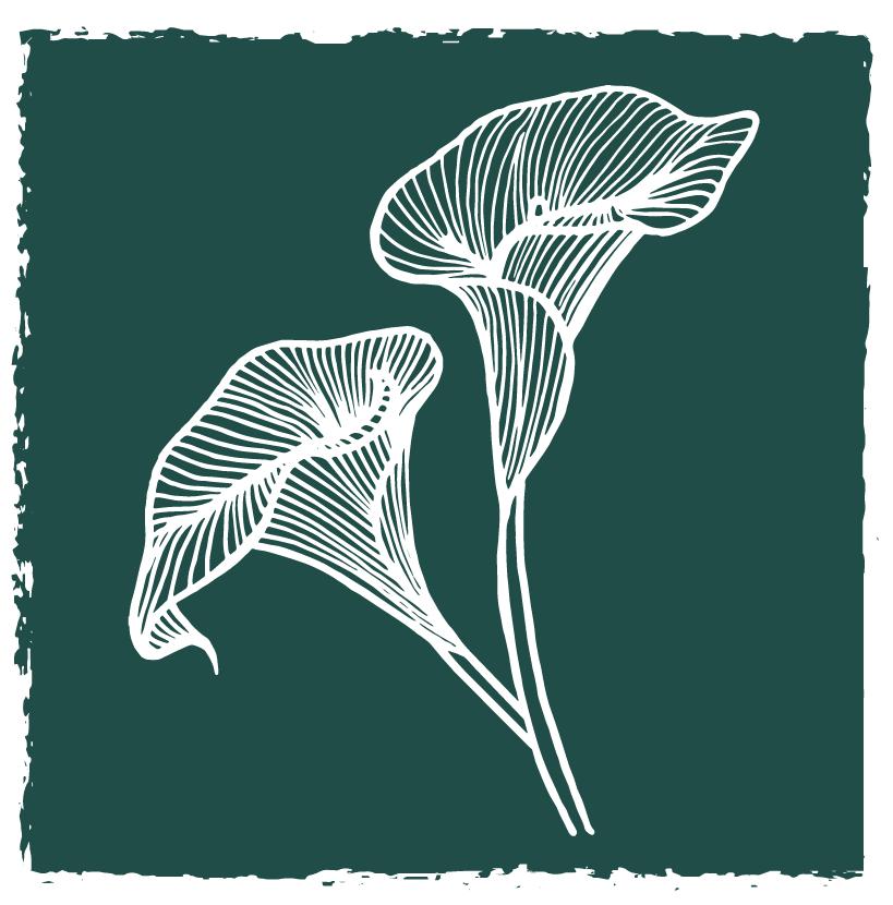 Arum Logo